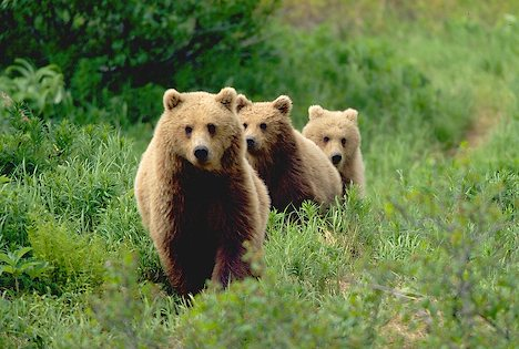three-little-bears.jpg