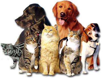 cats_n_dogs.jpg