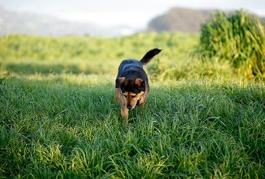 Angelo-the-dog-taking-a-walk.jpg