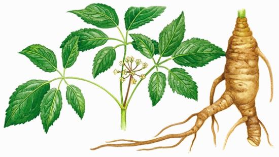 Ginseng-roots.jpg