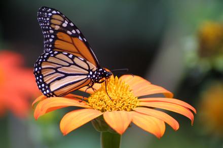 Treehill_Butterfly_Fest.jpg
