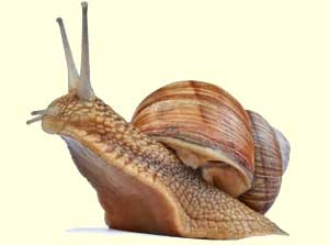 top_snail_facts.jpg