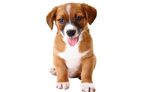 puppy_training.jpg