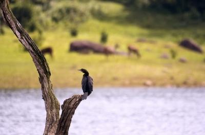 periyar bird.jpg